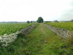 voie Aquitania,chemin Gallien,à Barsac 33