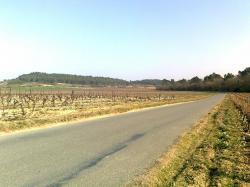 Bois de Fourtou route canal vers Mijane(ds dos)
