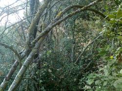 chemin Fourtou:tranchée vers canal et Mijane
