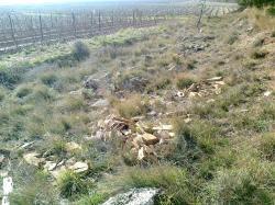 débris sauvés des vignes quelque part....
