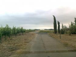 VSde coupe Dep Trausse à Rieux( zéro Stop!)